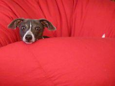 Snug as a bug in a bean bag chair!