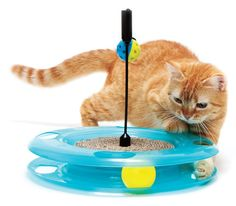 Игрушка Kitty City Swat Track and Scratcher. Размер: 31x31x6 см. http://catville.ru/igrushki/921-igrushka-kitty-city-swat-track-and-scratcher.html