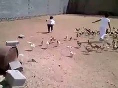 Chicken Run!   Looplr Smartphone video sharing, watch this – by rony990