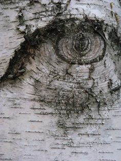 Eye on tree knot, Via Link has lots photos strange, weird , odd , unique trees http://www.flickriver.com/groups/strange_weird_odd_unique_trees/pool/interesting/