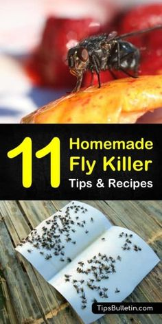 Homemade Fly Killer Recipes: 11 Natural Tips For Killing Flies