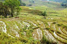 Vietnam fotograferen op reis Sapa