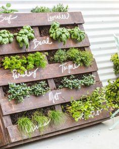Profitez du retour des beaux jours pour faire votre potager ! Herb Garden Pallet, Herb Garden Design, Diy Herb Garden, Olive Garden, Pallet Gardening, Herbs Garden, Pallet Garden Walls, Vertical Pallet Garden, Garden Ideas For Pallets