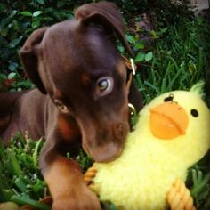 My duckie