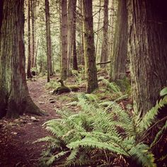 Check out my awesome travel photography. A green Christmas on Mayne Island, BC. Come join me: www.instagram.com/heatherlbourque.com #travel #photography #travelphotography