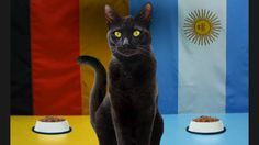 Allstate Has a Black Cat Who Will Predict the Loser of the World Cup Final Send bad luck to Argentina or Germany