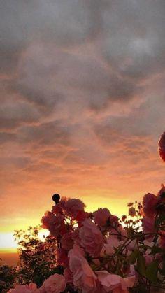 flower wallpaper Rose - - Celia Na. Iphone Background Wallpaper, Tumblr Wallpaper, Flower Wallpaper, Nature Wallpaper, Wallpaper Quotes, Black Wallpaper, Walpaper Iphone, Sunset Wallpaper, Beautiful Wallpaper
