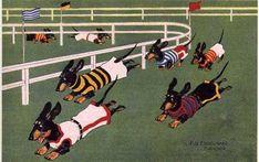 Vintage Dachshund Postcard - wiener dog races
