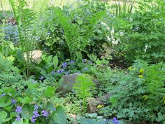 This woodland garden features ferns,violets,bleeding heart, and lily-of-the-valley.