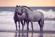 Happy Valentines Day ❤️❤️❤️ #horse #horses #horsesofinstagram #horsesofig #horsephotography #horseaddict #horselove #horsephoto #instahorse #equus #equine #equestrian #equinesofinstagram #equineart #equinelove #equinephotography #equinelife #beach #love #valentines #pferd #pferde #pferdefotografie #pferdeschoenheiten