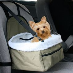 Pet Booster for the Car.