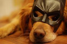 the Bark Knight