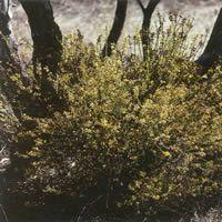 Large image of plant