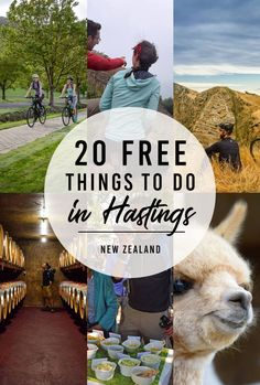 19 Free & Cheap Things to Do in Hastings - NZ Pocket Guide New Zealand Travel Guide Cheap Things To Do, Free Things To Do, Stuff To Do, Hastings New Zealand, North Island New Zealand, New Zealand Travel Guide, Bay News, Bee Movie, Beautiful Islands