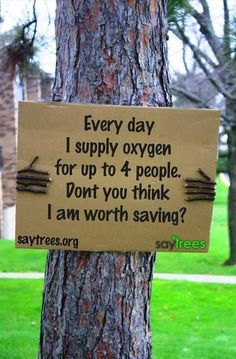 Trees help to slow climate change. They also improve air quality in urban areas. Don't cut down trees for a new home or for yet more agricultural land to feed yet more animals for meat, or for palm oil plantations. Your daily choices (what you buy) affect what happens to trees.