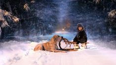Animals in winter, pictures | Beautiful Pictures