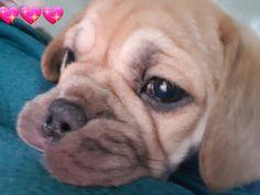 Dogs, Animals, Animales, Animaux, Pet Dogs, Doggies, Animal, Dog, Animais