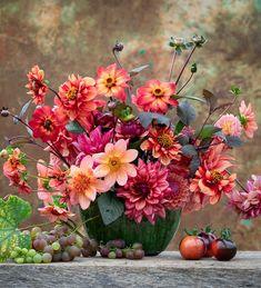 Autumn Garden, Summer Garden, Plant Delivery, Home Flowers, Pink Petals, Dahlia Flower, Garden Inspiration, Garden Ideas, Perennials