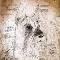 """Schnauzer Cropped Ears"" Detail of a Da VInci style drawing"