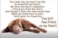 Dog Love, Puppy Love, Rainbow Bridge Dog, Pet Loss Quotes, Dog Poems, Condolences, Make New Friends, Prayers, Puppies