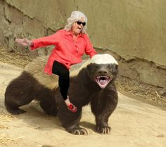 """the honey badger video. it's hilarious. """"honey badger don't give a shit"""" I Love To Laugh, Make Me Smile, Happy Smile, Funny Animals, Cute Animals, Scary Animals, Animal Funnies, Strange Animals, Thing 1"""