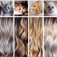 Hair color in kitty form! Curly Hair Styles, Natural Hair Styles, Hair Colorist, Haircolor, Light Hair, Scene Hair, Hair Painting, Hair Transformation, Gold Hair
