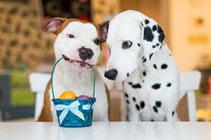 Foto: Backhund / Shutter Dogs