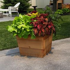 Give Your Home A Fresh New Look With New Landscaping – Pool Landscape Ideas Patio Planters, Wooden Planters, Cedar Planter Box, Planter Boxes, Landscaping Tips, Landscape, Garden, Plants, Lawn