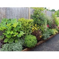Green garden on pinterest flower plants wildflower for Low maintenance border shrubs
