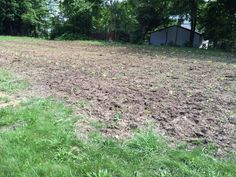 Look what's growing at Hattie's Gardens at the Akron Zoo!  Pumpkins, cabbages and winter squash are growing in the field.  To learn more about the partnership between the Akron Zoo and Hattie Larlham, visit: http://share.hattielarlham.org/akron-zoo-partners-with-hattie%E2%80%99s-gardens-to-improve-the-community/ #gardening