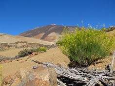 Tenerife hiking is a great choice all over the year. Here you read about our hikes, interesting informations, a hiking week and tips for trekking.