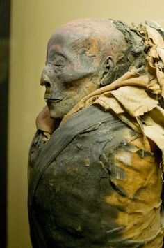 https://flic.kr/p/2Bo9CX | field museum mummy | apparently the facial features of this mummy are so well-preserved because he worked at the temple... though not necessarily a high-class citizen, he did get top-notch mummification as a job perk.