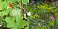 11 plant combos you should grow side-by-side