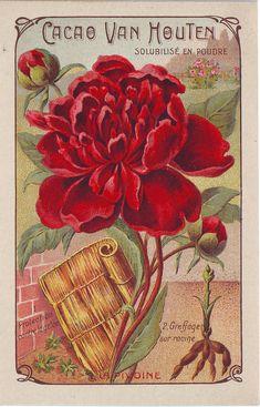 Image à collectionner / Cacao Van Houten Éphémères Vintage, Vintage Artwork, Vintage Labels, Vintage Ephemera, Vintage Cards, Vintage Paper, Vintage Postcards, Vintage Images, Printable Vintage