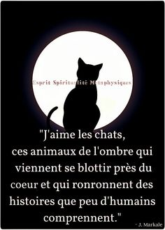 Coaching, Celestial, Comme, I Love Cats, Dogs, Quotes, Texts, Tips, Psychology