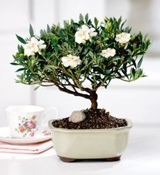 I would love to have the smell of gardenias indoors :)