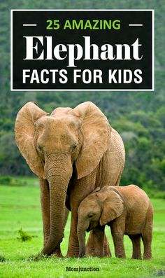 Elephant Facts for Kids | Education that I love | Pinterest ...