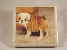 Too Cute / English Baby Bulldog by TheCoasterMan on Etsy, $8.00