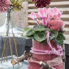 Cyclamen Scholten Pastel (©TheInspirationtable) Glass Vase, Pastel, Table Decorations, Rose, Flowers, Pink, Furniture, Home Decor, Cake