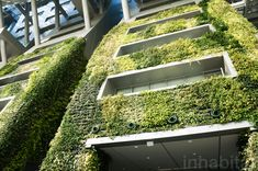 7-Story Indoor Green Wall is an Enormous Air Filter for Designed by iArc Architects, the seven-story-high vertical garden was created to complement Seoul City Hall's environmentally friendly features, including its numerous renewable energy sources from solar power to geothermal energy. Approximately 65,000 plants from 14 different species grow in the garden, which spans an area greater than 17,000 square feet.