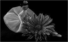 https://flic.kr/p/RfpUGG | Ballerina Daisy  (mono)