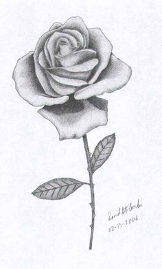 Rose Drawings | These Drawings of Roses have been adapted from images from my ...
