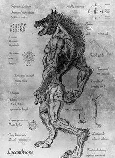 animal, dangerous, and human image