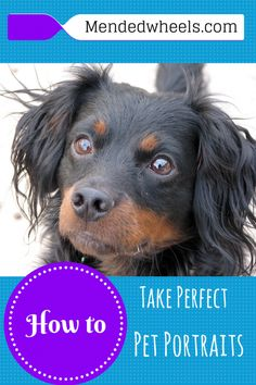 Don't hire a professional to take your pet portraits! With these tips you can take pet shots like a PRO!
