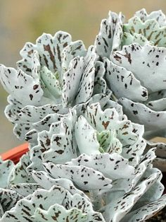 What Are Succulent Plants And Where Are They From? - Succulent Plants and Care House Plants, Planting Flowers, Plants, Succulents, Cool Plants, Cactus Garden, Unusual Plants, Air Plants, Planting Succulents