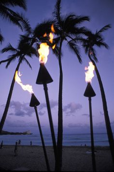 Palm trees and tiek torches in silhouette during sunset on Oahu, Hawaii.