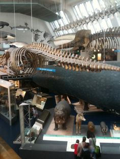 Twitter / StephenM1992: Mental. Natural history museum ...