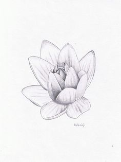 My Illustrations - Water Lily