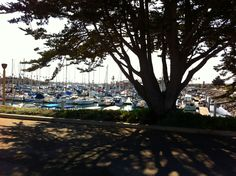 Harbor Tree in Channel Islands Harbor (California Travel)