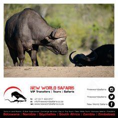 New World Safaris ------------------ VIP Transfers   Tours   Safaris ------ Follow us on Facebook facebook.com/newworldsafaris African Buffalo, Travel Tours, Day Trip, Vip, Safari, Photographs, Elephant, Facebook, Photos